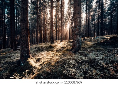 Warm rays of the sun penetrate into the dark forest