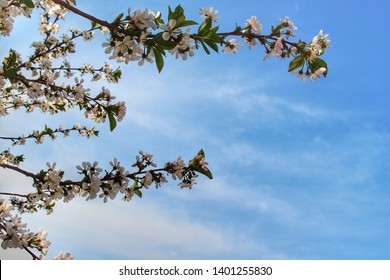 A warm spring day, a flowering branch against the background of a blue sky. Beautiful weather, winter is over soon summer. There is a place for text.