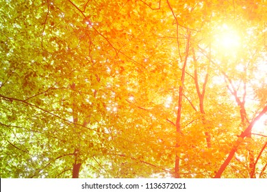 The warm spring sun shining through the treetop