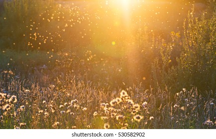 Warm summer evening natural blurred background with sun rays and gnats above grass.