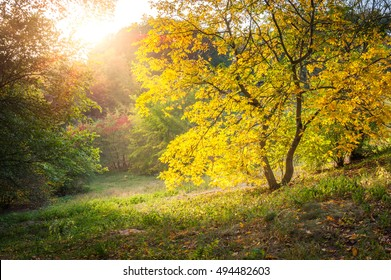 Temperate zone images stock photos vectors shutterstock warm sun flare shining through the bushes and walnut trees on a beautiful autumn evening altavistaventures Image collections