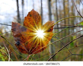 warm-sunbeams-shining-through-leaf-260nw