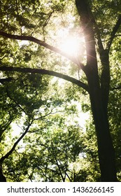 Warm sunlight shining through the branches of trees - a spring or summer scene from a forest or a park.