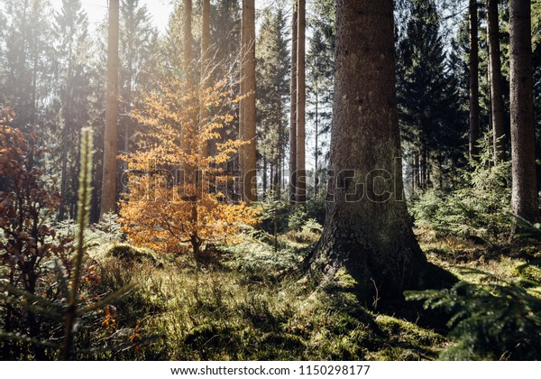 Warm sunshine in the autumn forest