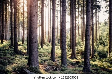 Warm sunshine in the fresh forest