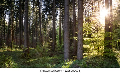 Warm sunshine in the Harz mixed forest