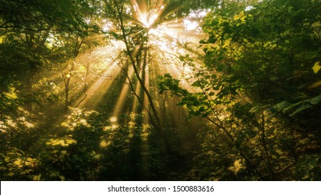 A warm toned blurry view of sun light shinning through a forest canopy.