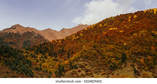 warm weather, mountains covered with green trees