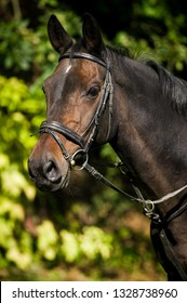 Warmblood horse with bridle