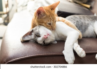 The Warmest Hug from two kitten