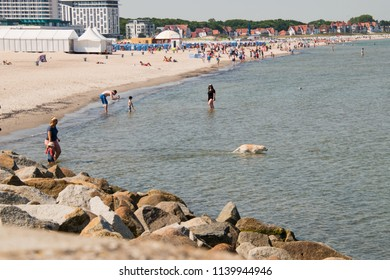 Warnemunde, Germany - June 8, 2018: View of beach and sea with white dog in water in the resort town of Warnemunde, Germany