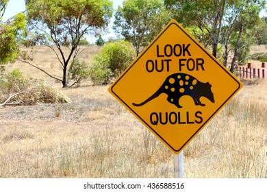 Warning road sign for crossing quolls, Flinders Ranges National Park, Australia