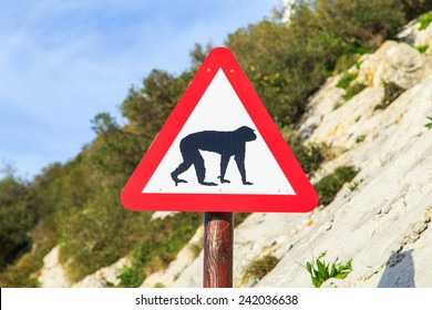 A a warning sign with Barbary macaques (Barbary apes) that live in Alameda Wildlife Conservation Park in Gibraltar