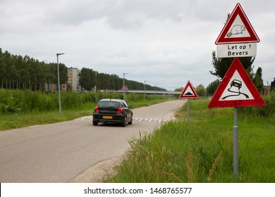 warning traffic sign 'let op bevers, meaning: watch out, Beaver crossing wild European or Eurasian beaver, Castor fiber and traffic warning sign for slipping danger (out of control)