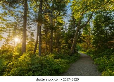 Warren lake path (Cape Breton Highlands National Park, Canada)