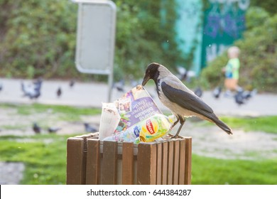 WARSAW - MAY 20: Hooded crow play with rubbish on May 20, 2017 in Warsaw Moczyd?o Park.