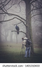 Warsaw, Poland - November 28, 2005: Man takes photo of peacock sitting on a tree in Royal Baths Park in Warsaw city