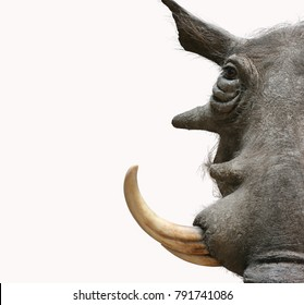 warthog portrait taxidermy objects isolated