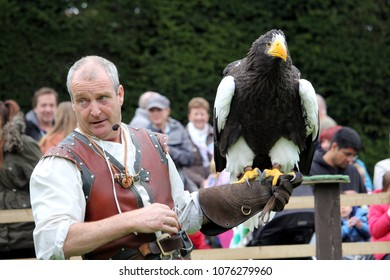 Warwick, UK - September 17 2017: A falconer with his Stellers Sea Eagle (Haliaeetus pelagicus) during a falconry display at Warwick Castle