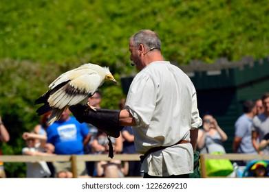 Warwick, Warwickshire, England, United Kingdom - June 24, 2018 : Falconer with an Egyptian vulture Latin nameNeophron percnopterus