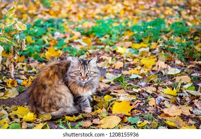 Wary cat sitting among the fallen leaves