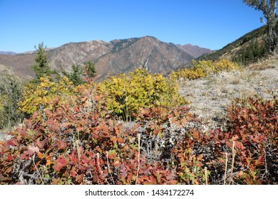 Wasatch mountain peaks with oak leaves in peak fall colors lining the Bonneville shoreline trail