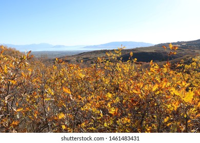 Wasatch Oak and Utah Lake in the Fall