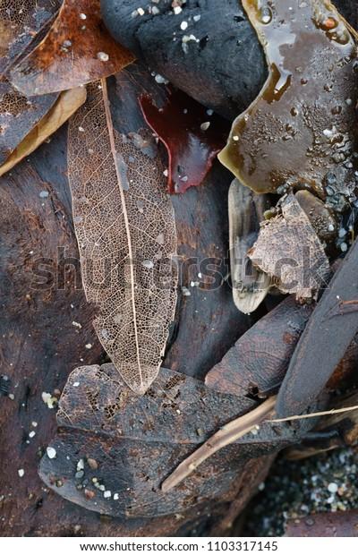 washed ashore plant debris