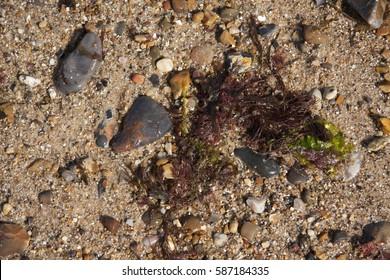 Washed ashore seaweed