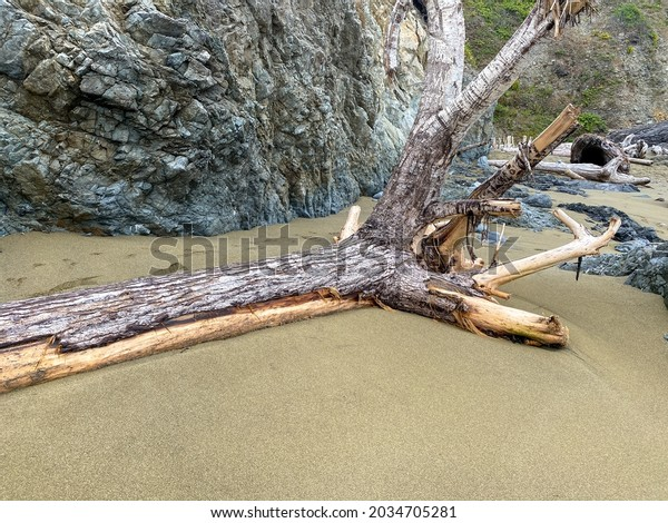 a washed up dead tree trunk on ocean beach shore with rock formations and reflections