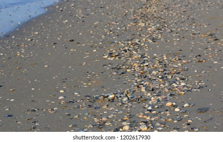 washed shells on the beach, Eraclea Mare, Italy