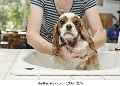 Washing The Dog In The Sink