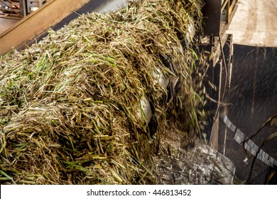 washing sugar cane