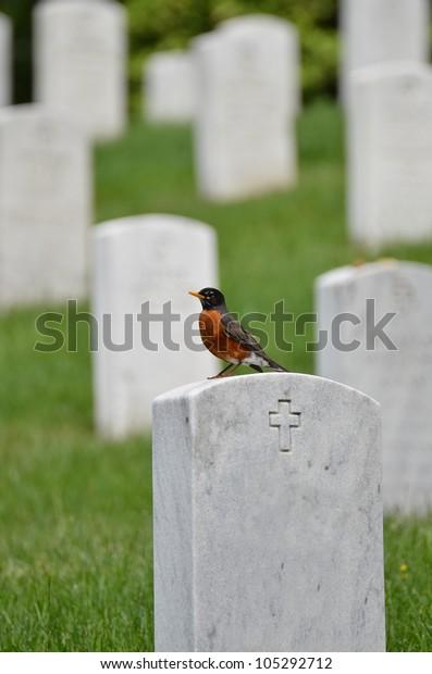 Washington DC - The bird on a tombstone in Arlington National Cemetery