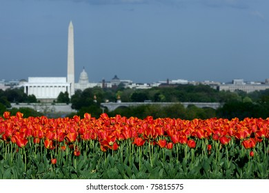 Washington DC landmarks lie beyond a bed of tulips in Arlington, Virginia.