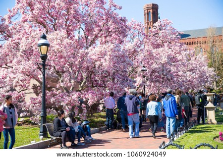 Washington Dc March 31 2018 Tourists Stock Photo Edit Now