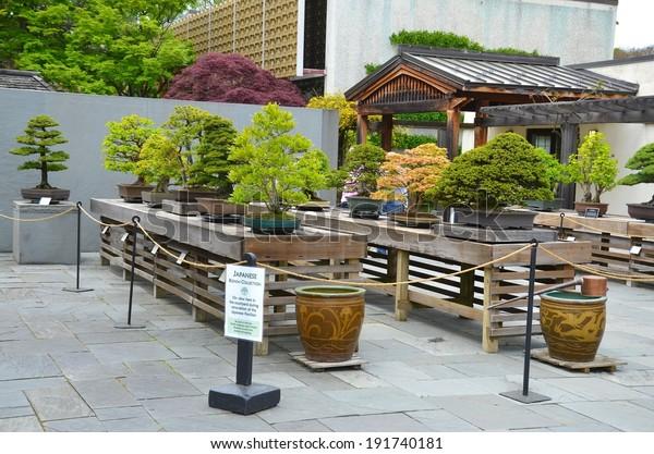 Washington Dc May 4 Bonsai Trees Stock Photo Edit Now 191740181