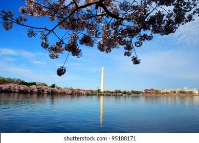 Washington DC Monument ,and Cherry Blossom USA