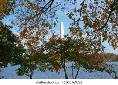 Washington DC, November 4, 2017: Washington memorial seen through a tree