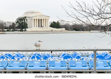 Washington DC - A seagull with Jefferson Memorial background
