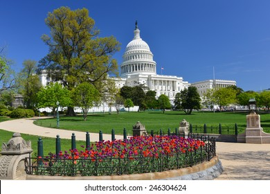 Washington DC in Spring - US Capitol and tulips