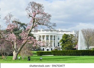 Washington DC in springtime - The White House among spring blossoms