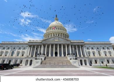 Washington D.C. - United States National Capitol and birds.