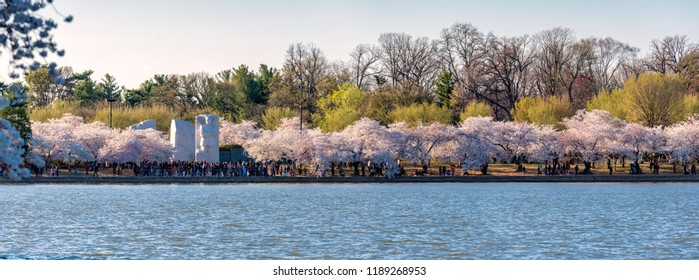 Washington DC, USA - April 08, 2018: Martin Luther King, Jr. Memorial and cherry trees blossoming at Tidal Basin.