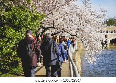 WASHINGTON D.C., USA - APRIL 1, 2019: Tourists walk through the flowers at the cherry blossom festival in Washington D.C.