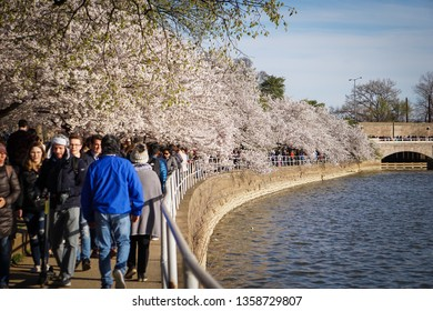 WASHINGTON D.C., USA - APRIL 1, 2019: Tourists walk along the tidal basin at the cherry blossom festival in Washington D.C.