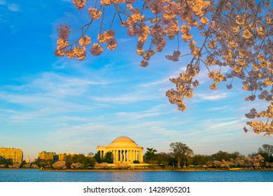 Washington, DC, USA - April 1, 2019: Jefferson memorial during cherry blossom festival looking across Tidal Basin