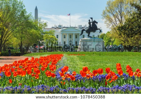 Washington, DC / USA - April 26, 2018: Tulips are in full bloom at the White House as the administration is plagued by scandal after scandal.