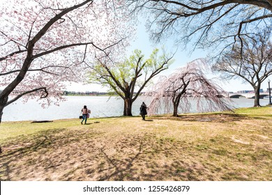 Washington DC, USA - April 5, 2018: Tourists people walking by cherry blossom sakura trees in spring with potomac river, memorial bridge, national mall