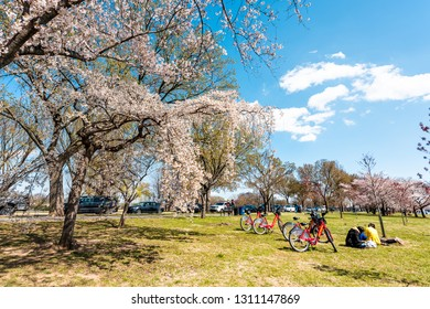 Washington DC, USA - April 5, 2018: Tourists people with bikes sitting having picnic by cherry blossom sakura trees in spring on West Potomac park on National mall